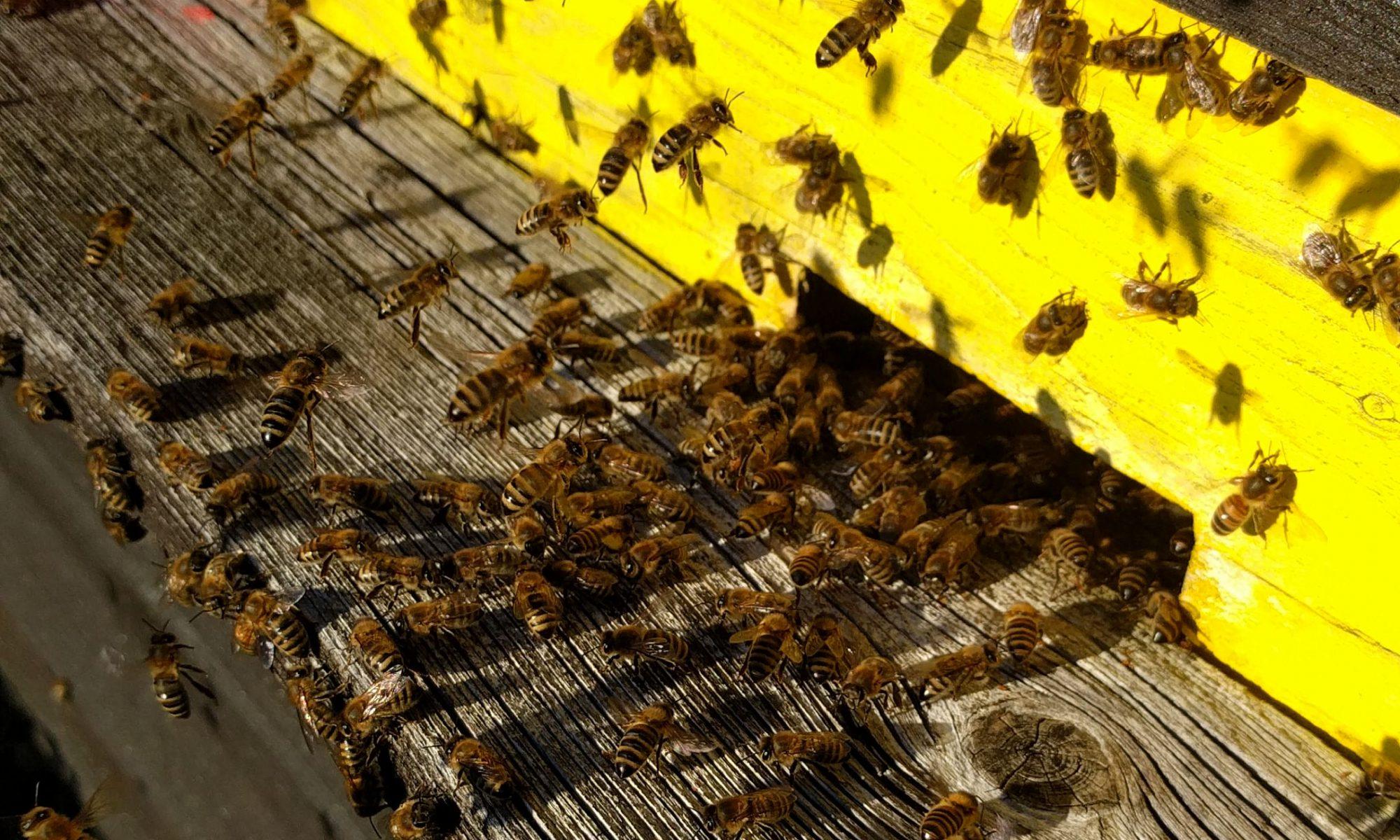 Honig vom Imkerguru